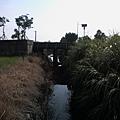 縣政府旁邊的小水溝4