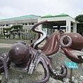 水族館的章魚