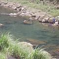014_有人在溪釣耶