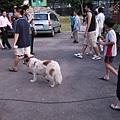 066_一直在現場跑來跑去的小狗