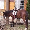 029_假日廣場的小馬