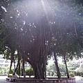 056_忘了是哪裡的大樹