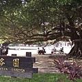 079_成大最有名的榕園3