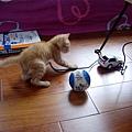 009_車子也是牠的玩具之一