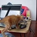 022_NANA也愛用電腦