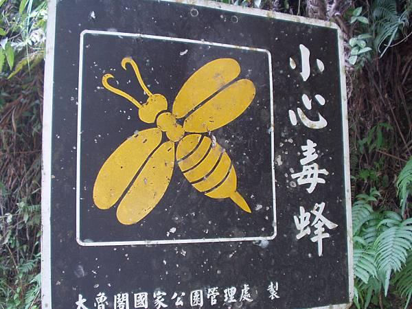 010_小心毒蜂