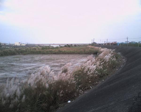 005_橋旁的芒草堆