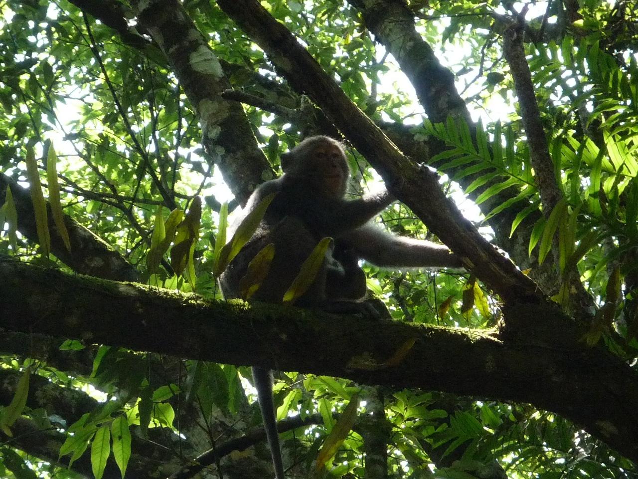 福山植物園的猴子