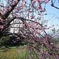 DSC00461豐原雲仙谷