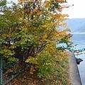 河口湖 (48).JPG