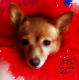 am a flower