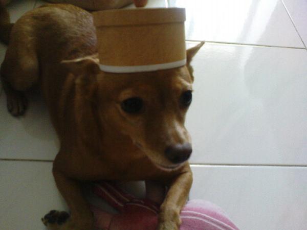 哈哈哈..我的帽子漂亮吗??