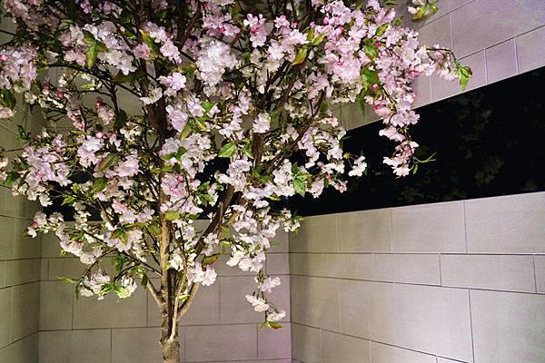 櫻花樹.jpg