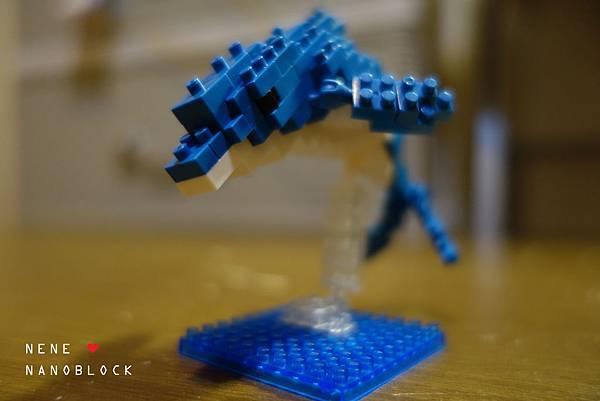 dolphin06.jpg