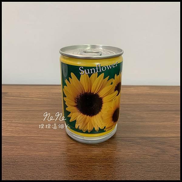 易開罐花卉向日葵種植