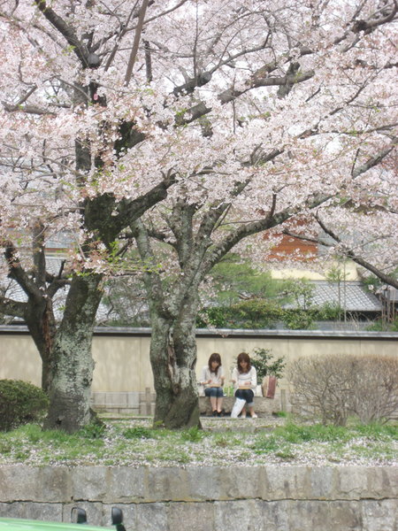 在櫻花樹下吃便當.jpg