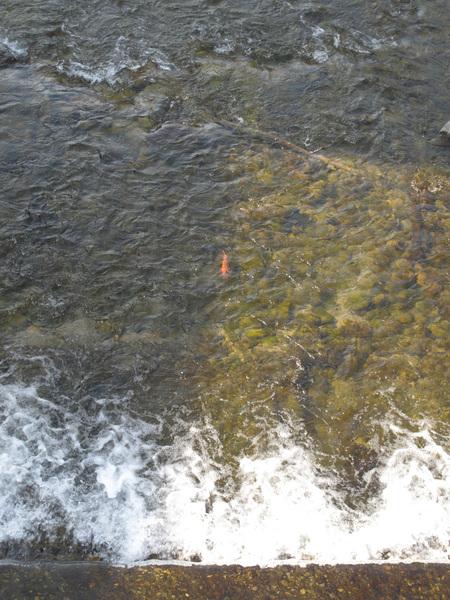 為什麼他們的溪流都可以這麼乾淨.jpg