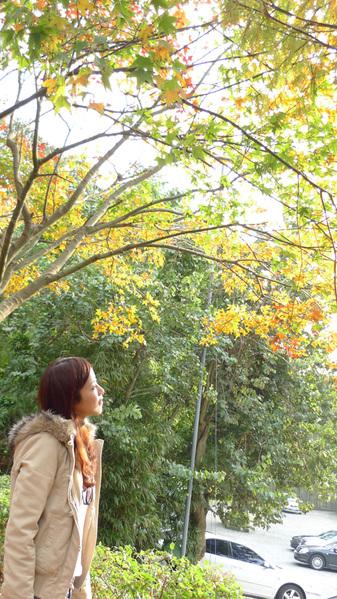 20091229_陽明山_021.jpg