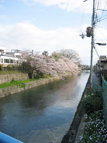 河水是乾淨的 才能長出美麗的櫻花.jpg