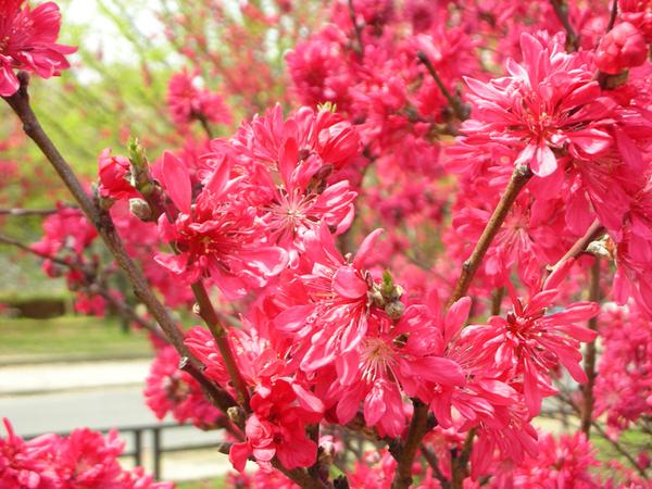 紅到像假的花.jpg