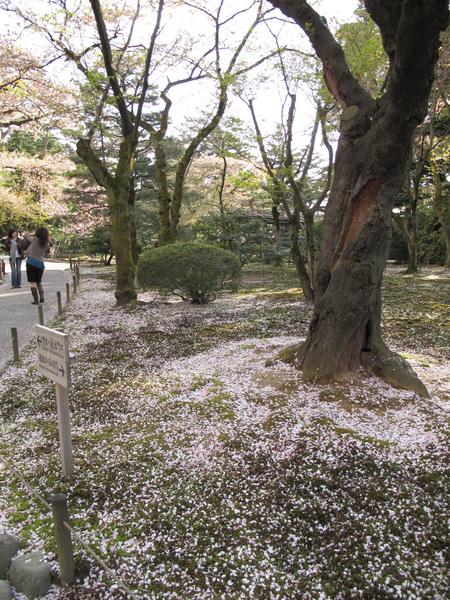 天然粉紅浪漫地毯.jpg