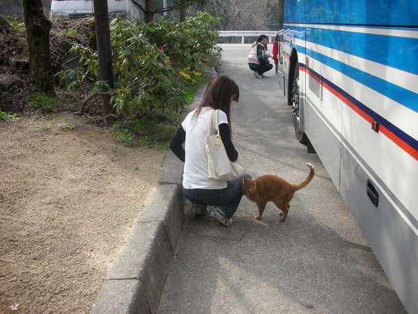遇到一隻不怕人的貓.jpg