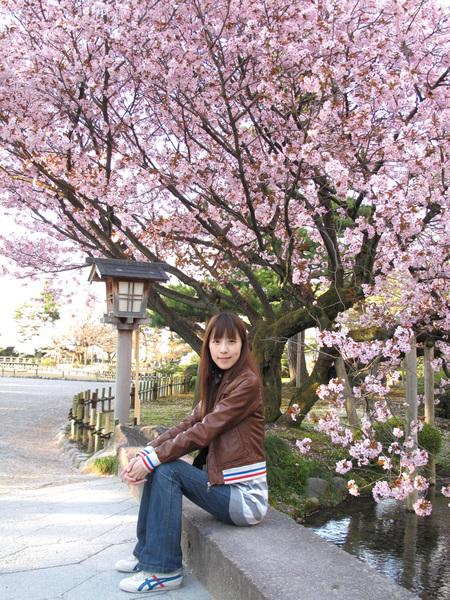 能連續兩年遇到盛開的櫻花 實在太棒了.jpg