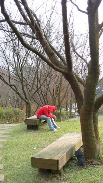 20091229_陽明山_018.jpg