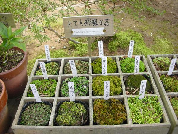 青苔植被的介紹.jpg