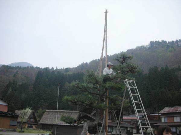 有人在幫松樹做雪吊.jpg