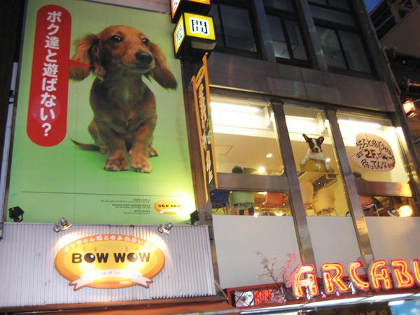 可以與狗狗一同用餐的店.jpg
