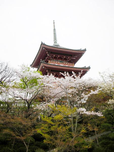 有櫻花陪襯的三重塔.jpg