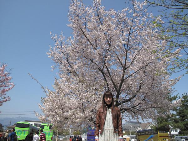 停車場有好多棵盛開的櫻花樹.jpg