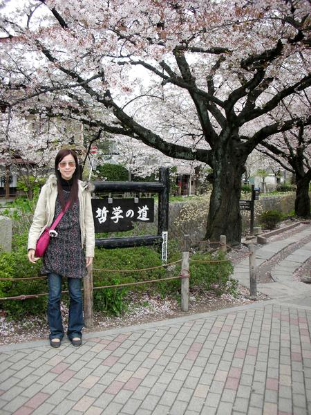 滿滿的櫻花.jpg