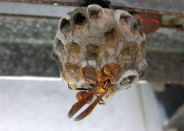 小蜜蜂0530