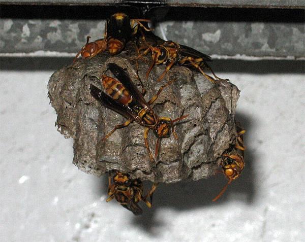 小蜜蜂0612