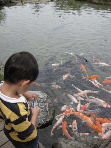 漁場內餵魚
