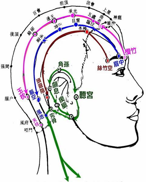 側頭部放鬆4條路線-2