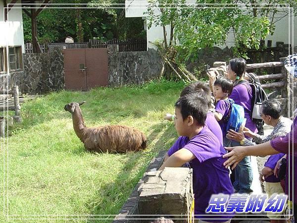 動物園戶外教學 (5).jpg