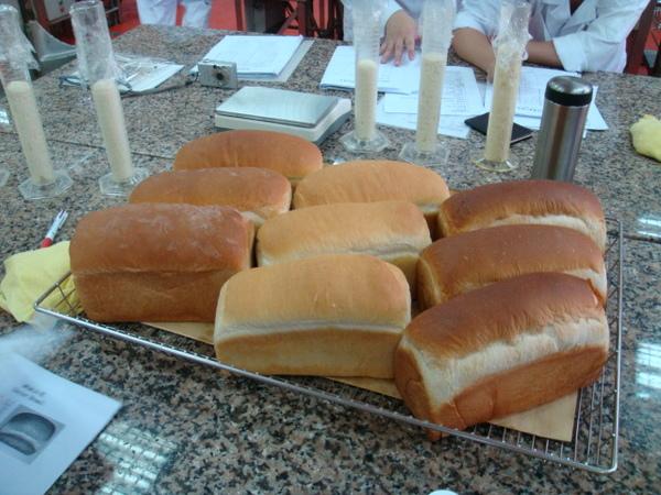 發酵期不同土司比較
