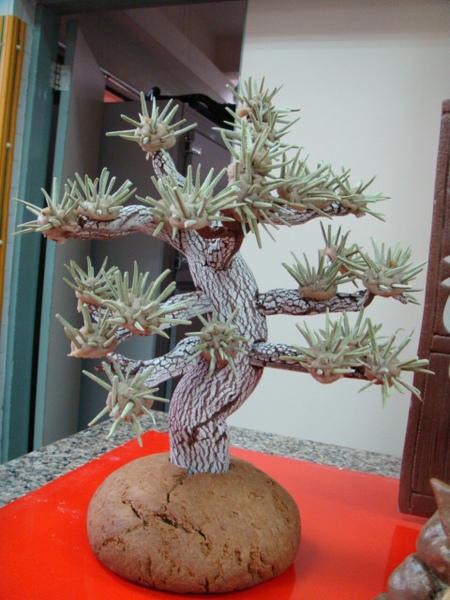 裝飾麵包-松樹