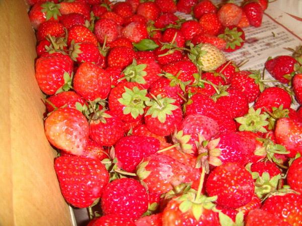 新鮮又香氣十足的草莓