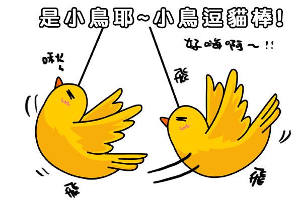 小鳥拷貝.jpg