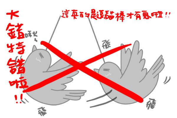 小鳥拷貝2.jpg