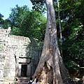 塔普倫寺4