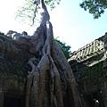 塔普倫寺8