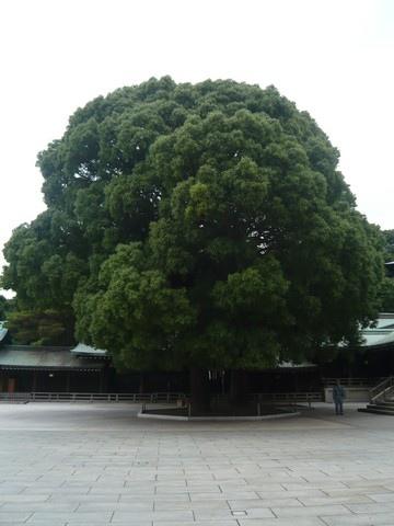 旁邊有大榕樹