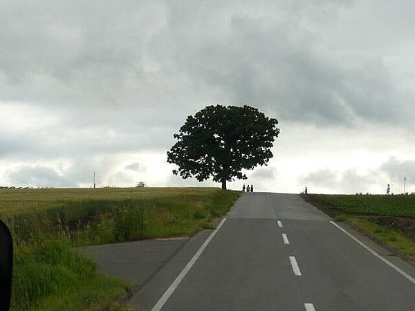 遠方的KEN&MARY之樹