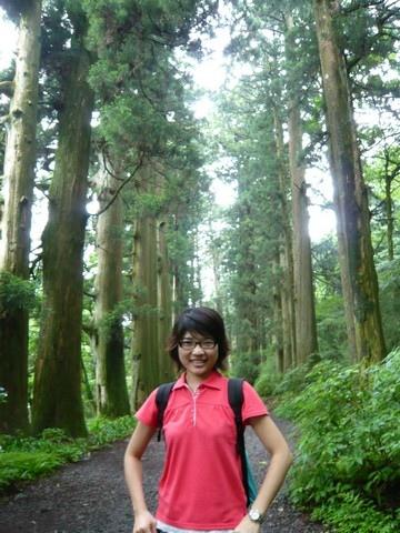 杉並木步道