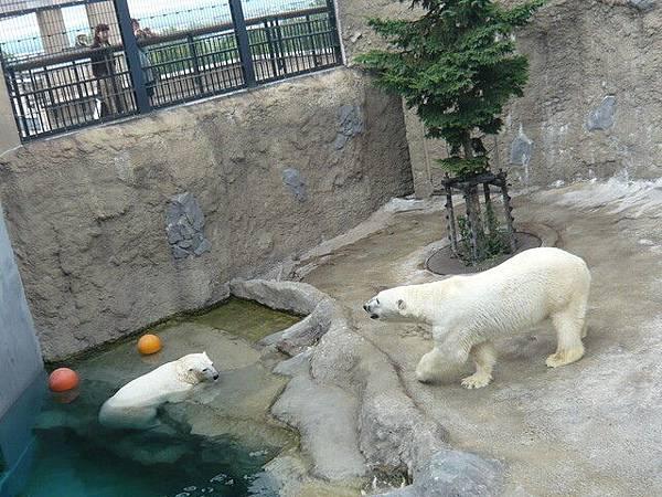 兩隻北極熊
